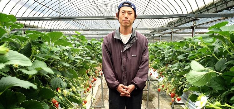 Eine Erdbeere für Tohoku